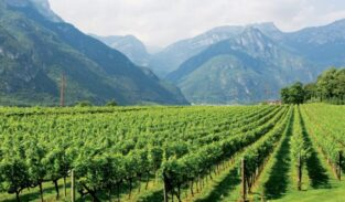 Northern Treasure of Dolomites Wine Country